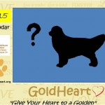 The Search is on for GoldHeart's 2015 Calendar Dogs!