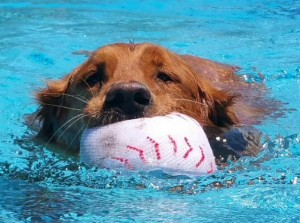 max in pool with ball