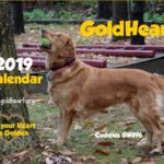 2019 Calendars Now Available
